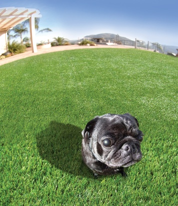 artificial-turf-for-pets