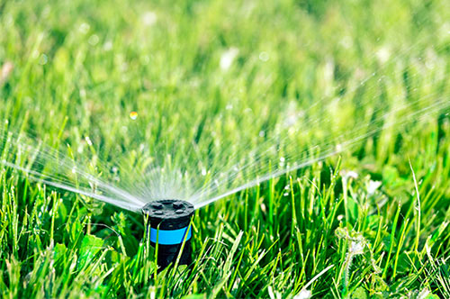 no-watering-1